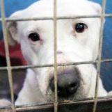 """Associazione """"In ricordo di Lacuna"""": """"Aiutiamo gli animali in difficoltà"""""""