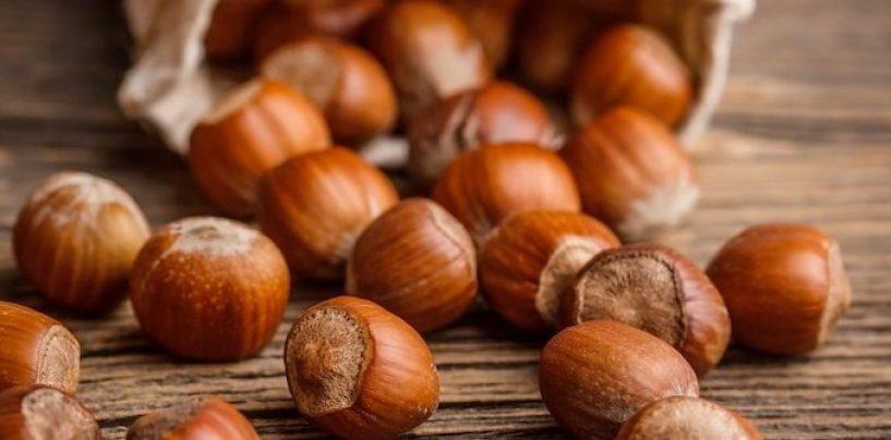 Solo nocciole irpine nei prodotti Ferrero: ecco il progetto di filiera