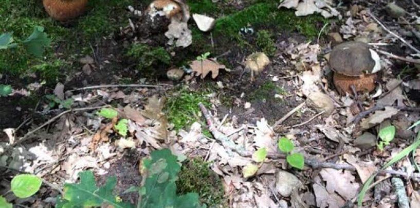 A funghi in Irpinia senza tesserino: salasso per due salernitani