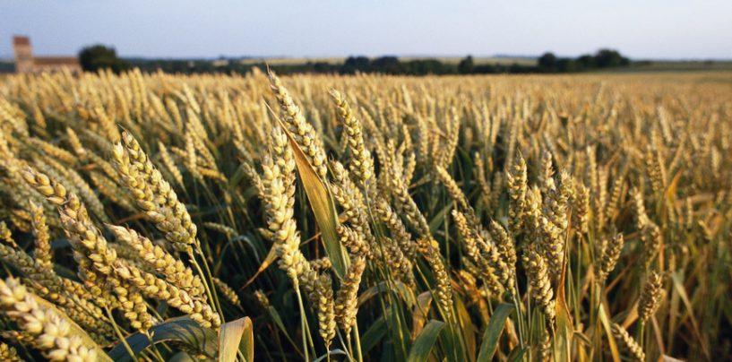 Distretti e export, bene l'agroalimentare di Avellino. In flessione il Distretto della concia