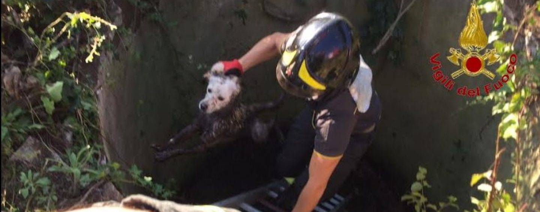 I Vigili del Fuoco salvano un cane finito in un pozzo
