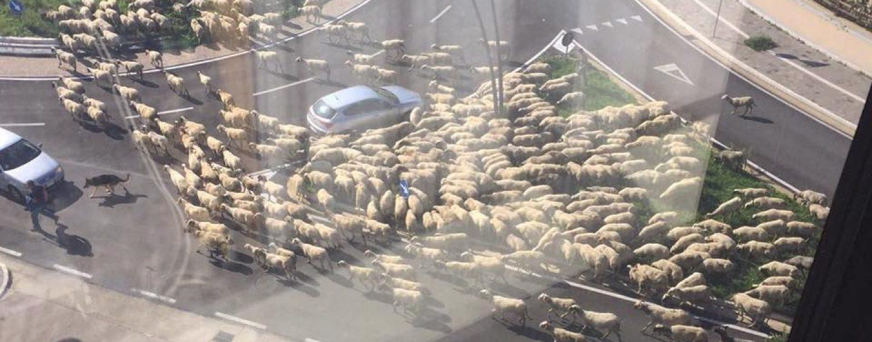 FOTO/ Claudio Bisio posta su fb tre foto da un hotel di Avellino: pecore in centro