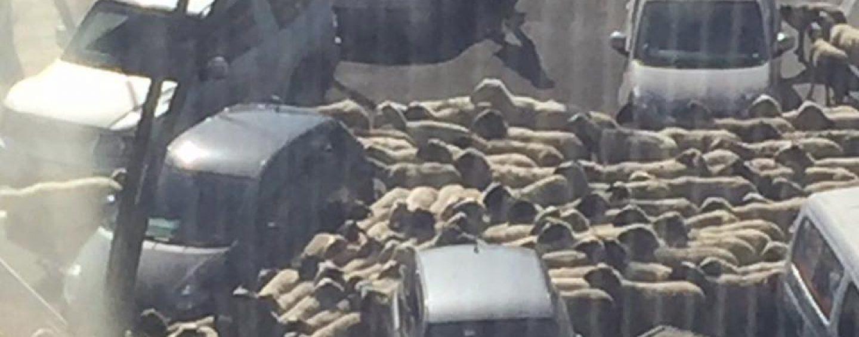 """VIDEO/ """"Buongiorno pecore nella bella Avellino"""". Frank Matano ironico o sarcastico?"""