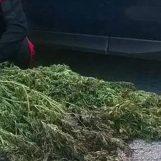 Montella, i carabinieri scoprono una piantagione di cannabis