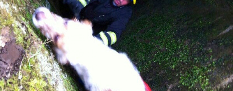 Cane finisce in un pozzo, salvato dai caschi rossi