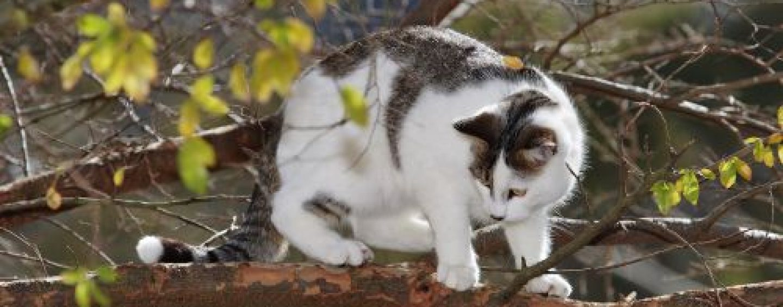 Avellino, la Gadit salva un gattino e lo restituisce alla padrona