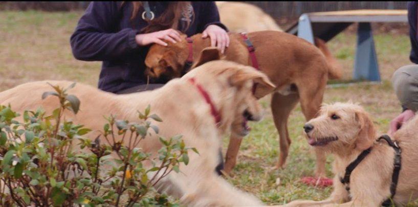 Consegnati pasti per i pets dei rifugi ENPA in Campania