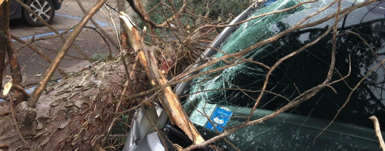 Forti raffiche di vento a Benevento, albero cade su un'auto