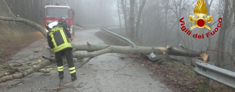 Trevico, cade un albero sulla Strada Provinciale