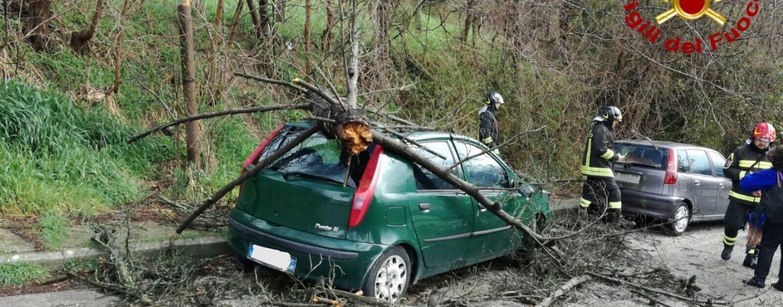 Materdomini, un ramo cade su di un'auto: nessun ferito