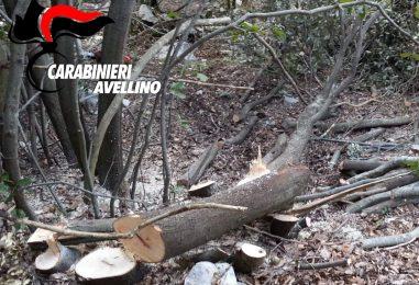 Serino, ruba legna in bosco protetto: un arresto e una denuncia