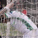 Ternana-Avellino 4-1, la fotogallery di Irpinianews