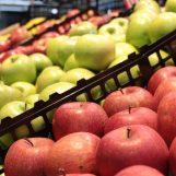 Mosca orientale della frutta, è allarme: prima segnalazione in Campania