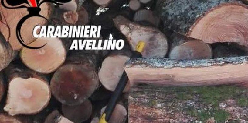 Calabritto, danneggiamento boschivo e furto di legna: due denunce