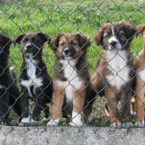 #proteggianimali, giornata di sensibilizzazione sulle tematiche animaliste presso la villa di Avellino