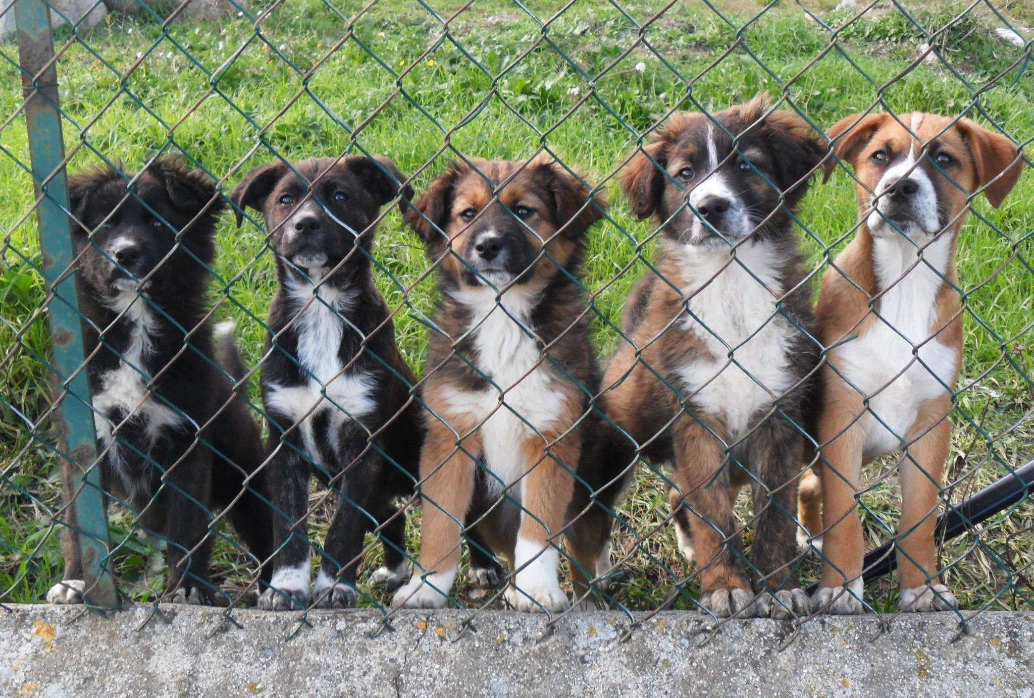 Adozioni canine a mercogliano arrivano gli incentivi per for Recinti per cuccioli di cane in casa