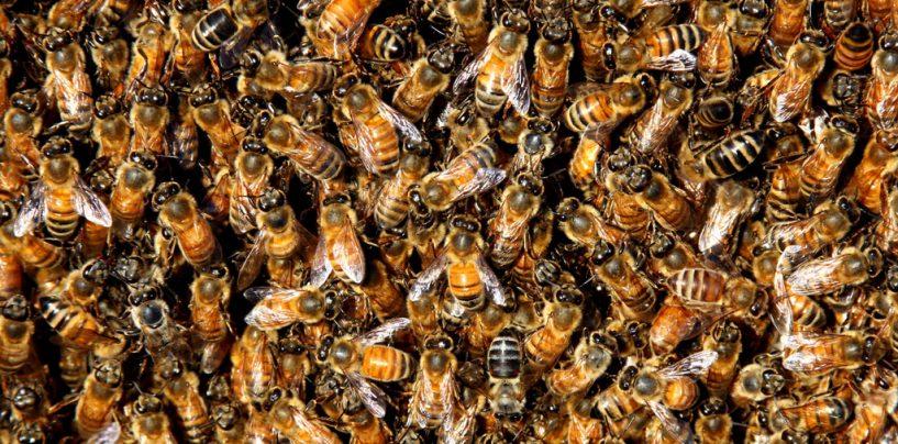 Sciame di api a Rione Aversa, panico tra i residenti