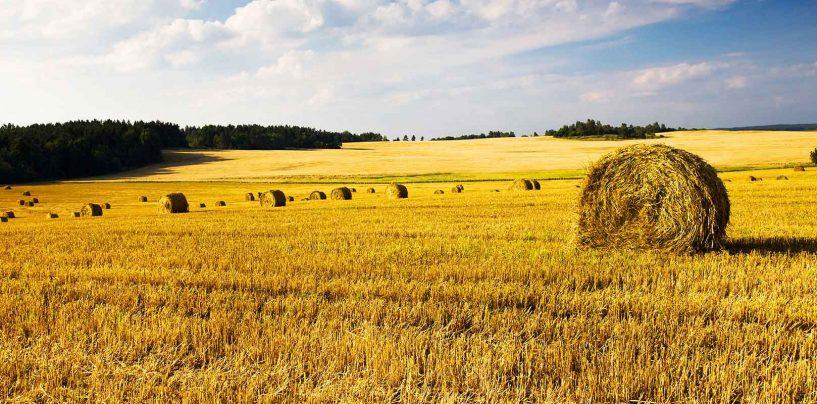 Le nuove misure del Programma di Sviluppo Rurale della Campania, l'UDC ne discute ad Ariano