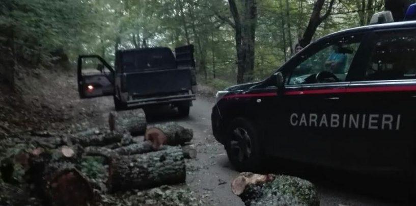 Bagnoli – Danneggiamento boschivo e furto di legna: due denunce