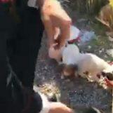 Cinque cagnolini abbandonati messi in salvo dai Carabinieri, si cerca il responsabile