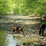 Escursionista americano trova cadavere nei boschi di Senerchia, potrebbe essere l'uomo scomparso lo scorso anno
