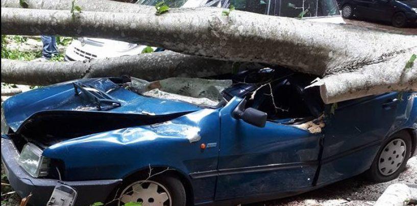 Dramma sfiorato a Lioni, albero crolla sulle auto in sosta