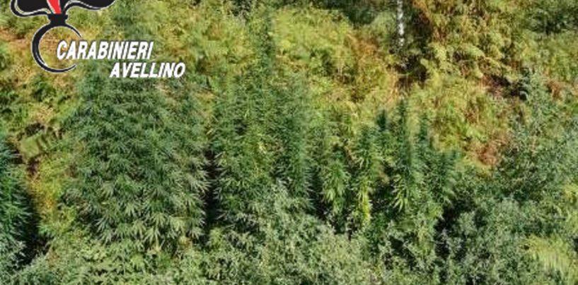 Montoro, piantagione di marijuana scoperta presso l'abitazione di un 55enne