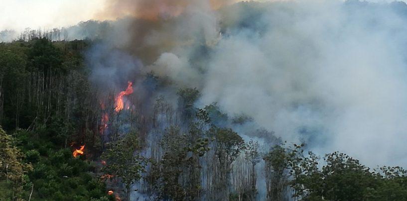 FOTO/ Faliesi brucia da 3 giorni: anche i serpenti tra i pericoli per gli operatori