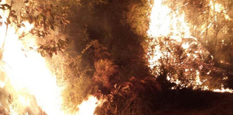 Incendiano sterpaglie nei loro fondi agricoli: denunciati in sette