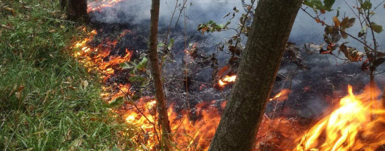 Estate e pericolo incendi boschivi: ecco i numeri utili da chiamare