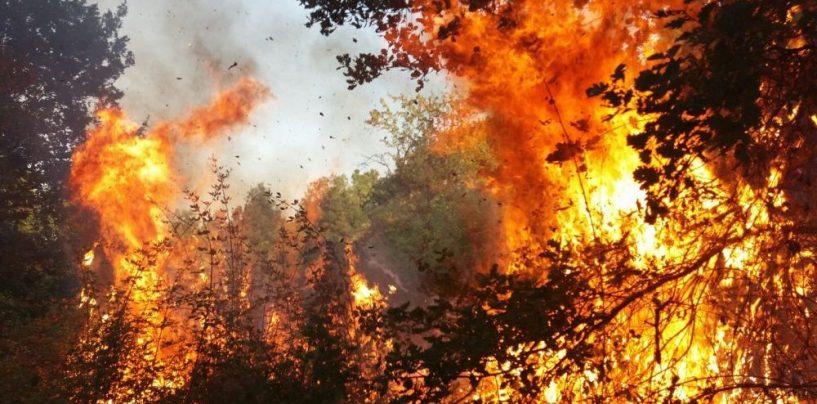La Verde Irpinia in fiamme per potenziali interessi economici: l'indagine della Procura dopo gli incendi del 2017
