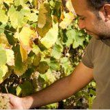 """""""Città europea del vino 2019"""" arriva il patrocinio del Parlamento europeo"""