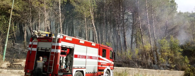 FOTO/ Brucia la pineta di Grottolella, al lavoro pompieri e personale del Comune