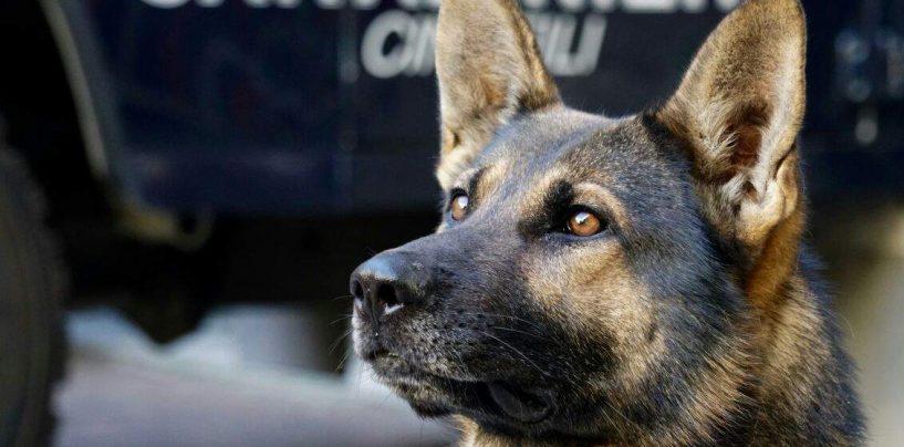 Nascondeva droga e armi nella baracca: arrestato 35enne di Montoro