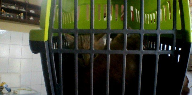 """Gattini abbandonati, l'appello dell'associazione animalista """"In ricordo di Lacuna"""""""