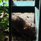 Topi nel giardino di una scuola materna, sdegno ad Avellino