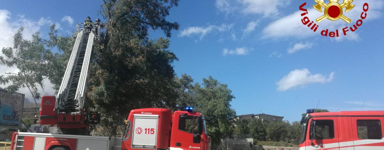 Il forte vento fa danni ad Avellino: caschi rossi al lavoro
