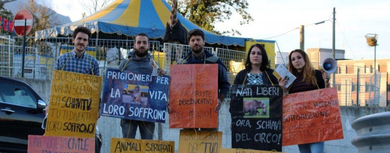 """""""Circo spettacolo più triste del mondo"""": prosegue la protesta degli animalisti"""