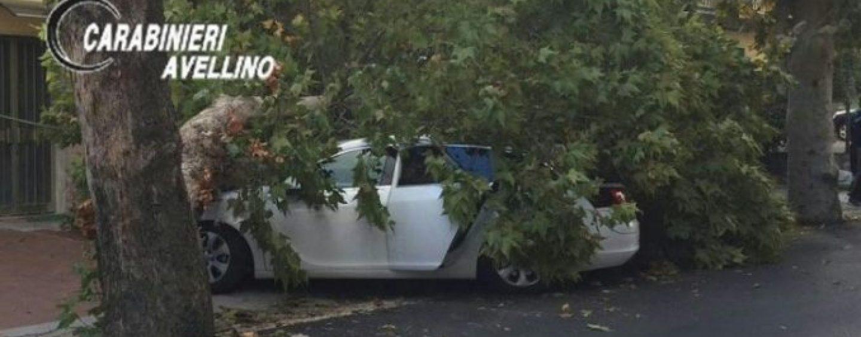 Sfiorata la tragedia a Grottaminarda, un ramo si spezza e colpisce un'auto