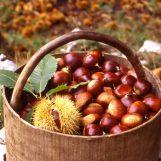 La castagna Igp irpina viaggia verso gli USA per il Giorno del Ringraziamento