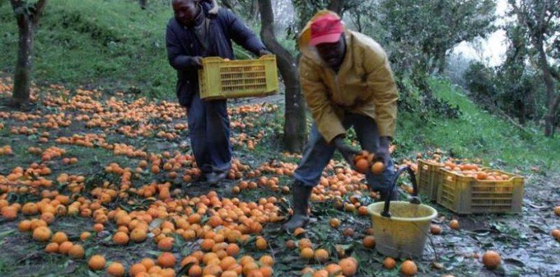 Controlli alle aziende agricole: lavoratori extra-comunitari in nero e olio e vino senza tracciabilità