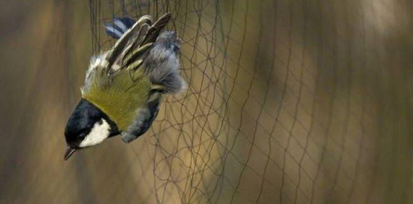 Piazzavano trappole per piccoli uccelli, due denunce per bracconaggio