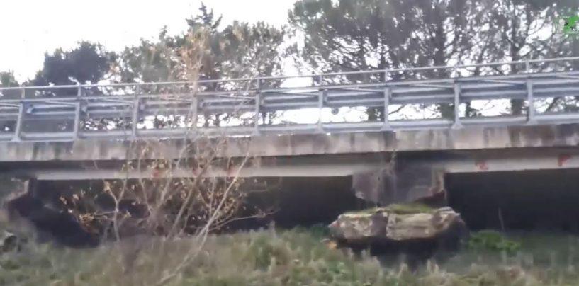 Viadotto Parolise, i lavori continuano. Polizia locale e Gadit in campo per la sicurezza degli automobilisti