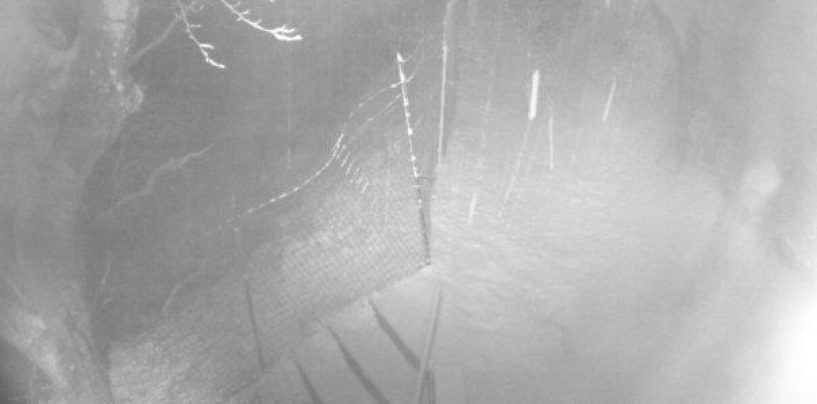 Neve in arrivo sopra gli 800 metri: fiocca a Montevergine