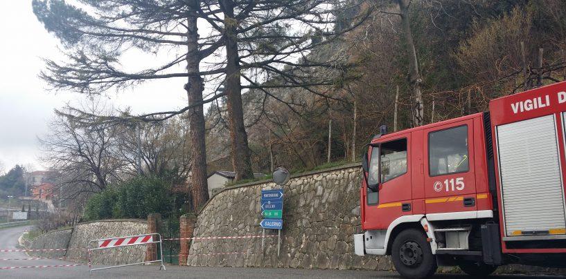 Albero pericolante, chiuso l'accesso per Salza Irpina