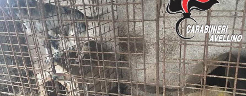 Cane morto tra sofferenze e stenti: l'indignazione degli animalisti