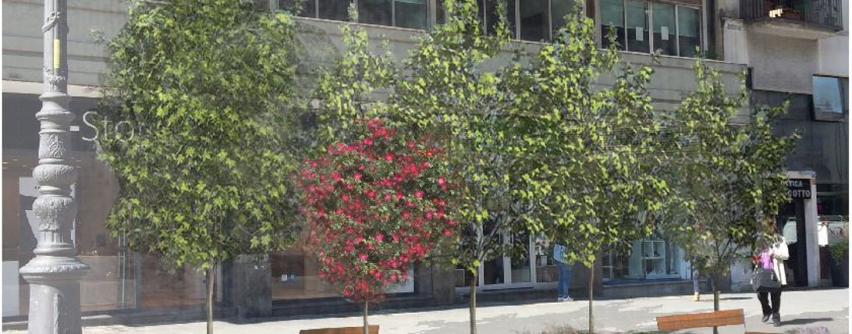 Via i gazebo, il restyling del Corso entra nel vivo: più aiuole e verde
