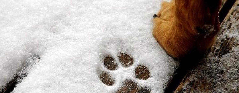 Gelo in Irpinia, le precauzioni per proteggere i nostri animali