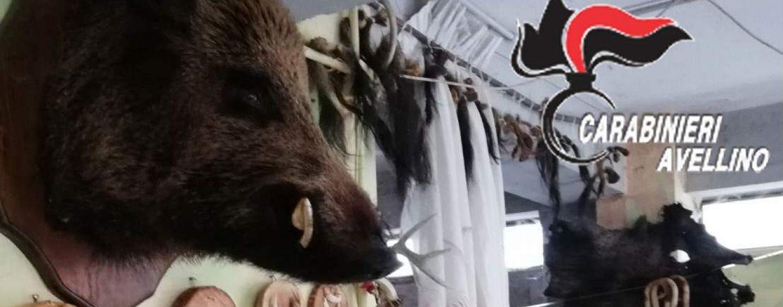 Detenevano illegalmente animali e li scuoiavano: Sos Natura denuncia la baracca degli orrori