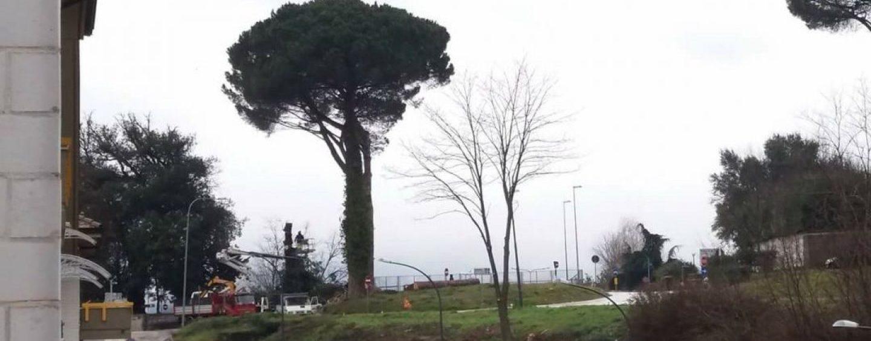 """""""Basta con la strage silenziosa degli alberi"""". Avellino, la denuncia di Ossigeno"""